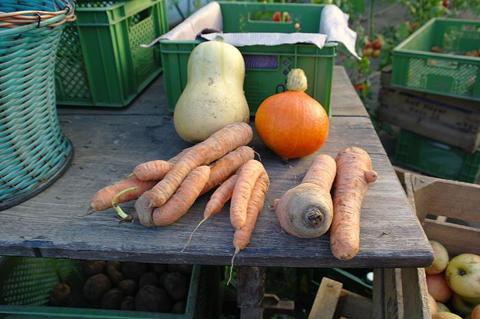 Woher bekommt man in der Stadt natürliches Gemüse? - Diese
