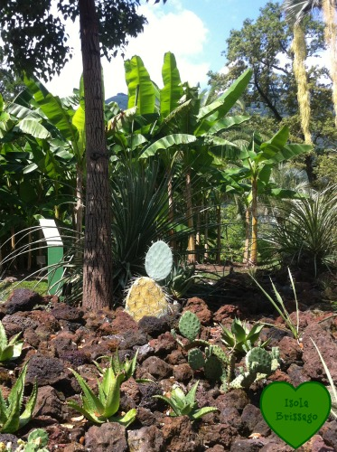 Botanischer Garten auf der Isola Brissago im Lago Maggiore