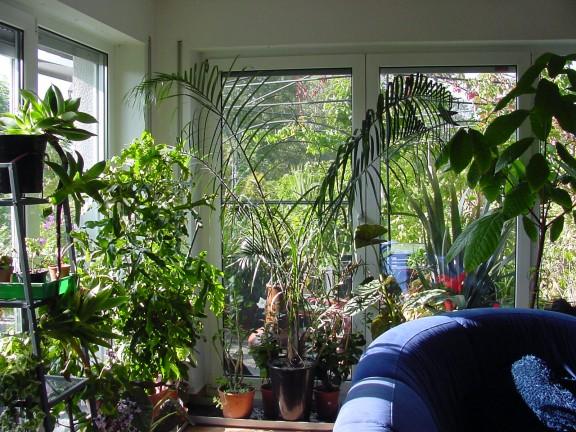 Gesunde pflanzen im winter for Pflanzen in wohnung