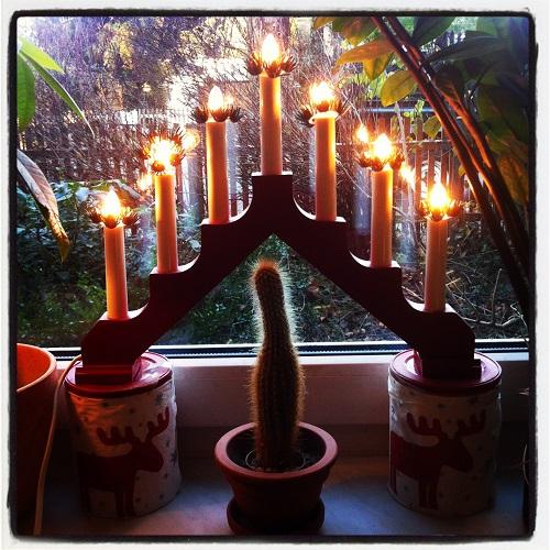 So wird ein Kaktus zum Weihnachtskaktus ;-)