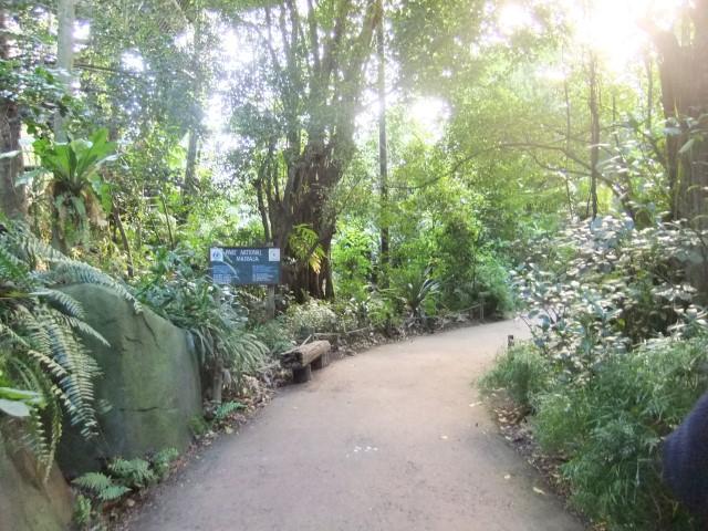 Der Eingang zum Regenwald