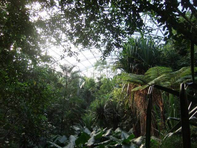 Regenwald im Gegenlicht...