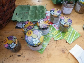 Jungpflanzen-Anzucht 4