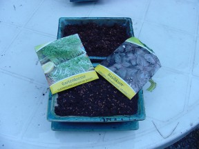 Mixed-Pflanzen: Kresse und Basilikum