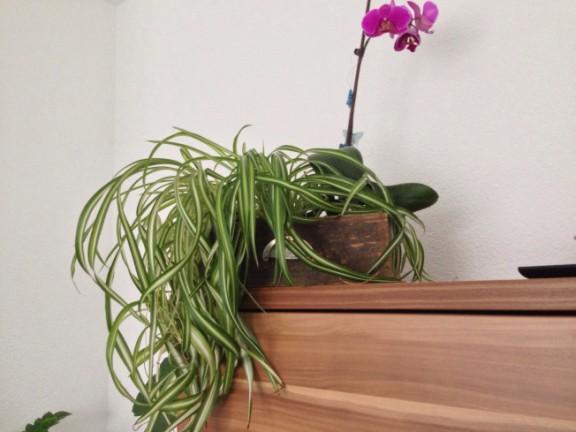 Blumen-Schubkasten