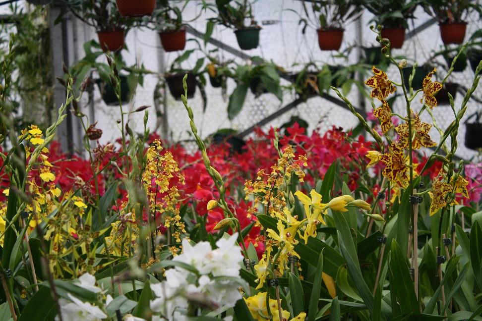 Orchideengarten Dahlenburg