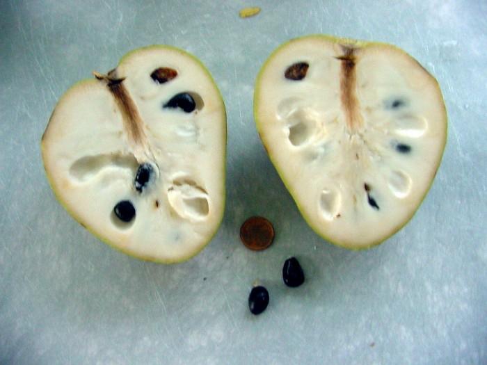 Cherimoya, lecker und mit Samen