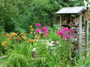 Mein Garten im Juli
