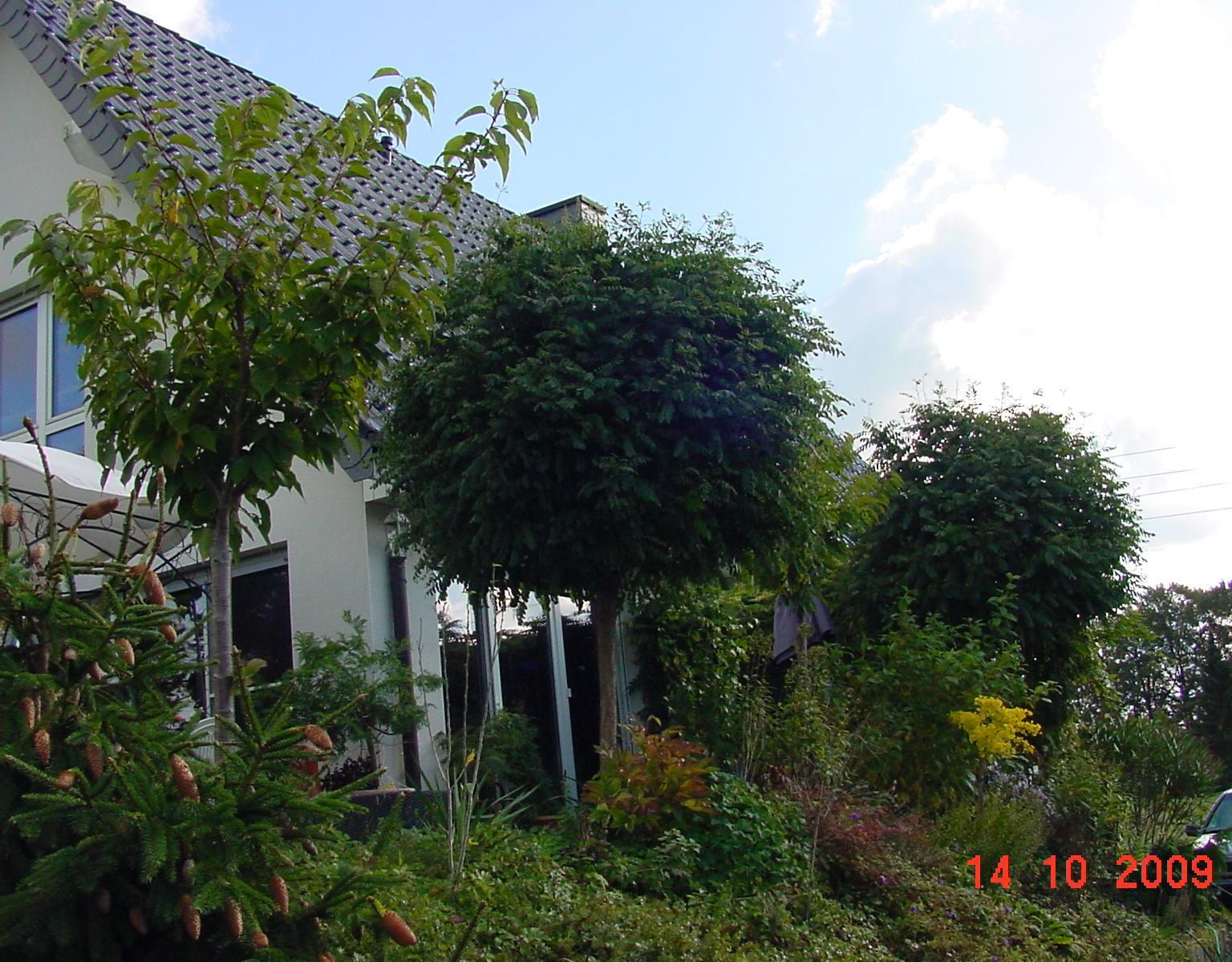 Grüner Sicht-und Sonnenschutz Mit Pflanzen