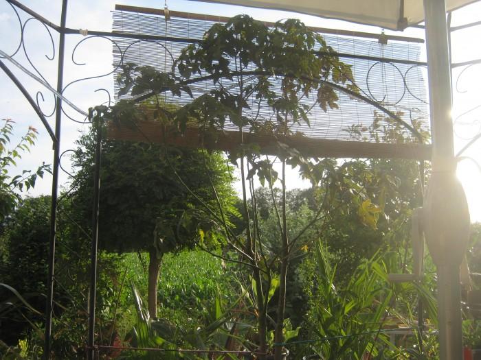 So ein Bambusrollo erzeugt eine gemütliche Stimmung und schützt vor der Sonne