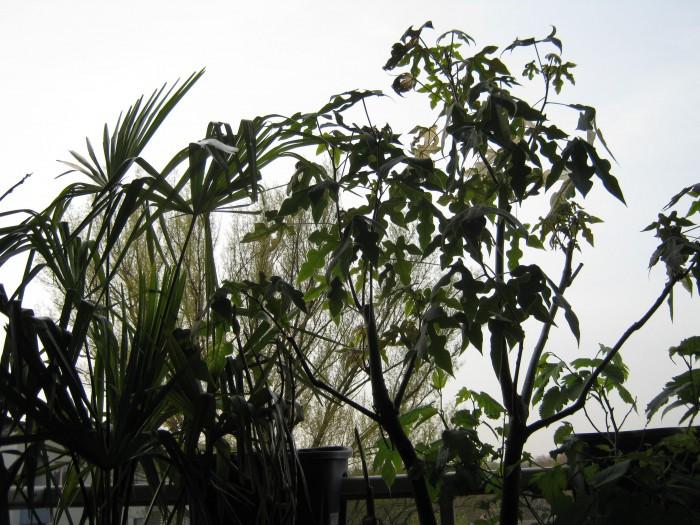 Kübelpflanzen als Sonnenschutz. Mir gefällt die Idee