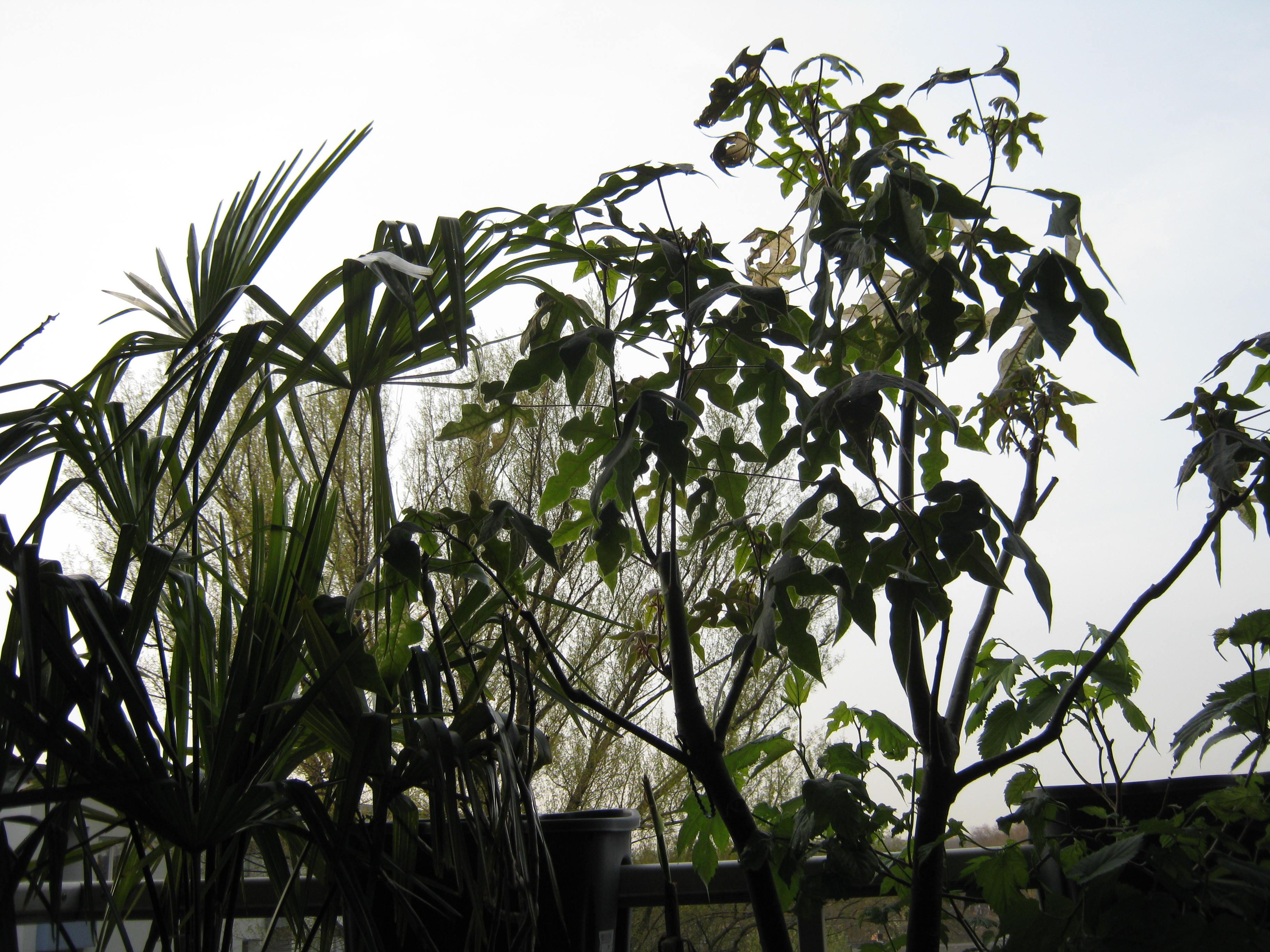 gr ner sicht und sonnenschutz mit pflanzen. Black Bedroom Furniture Sets. Home Design Ideas