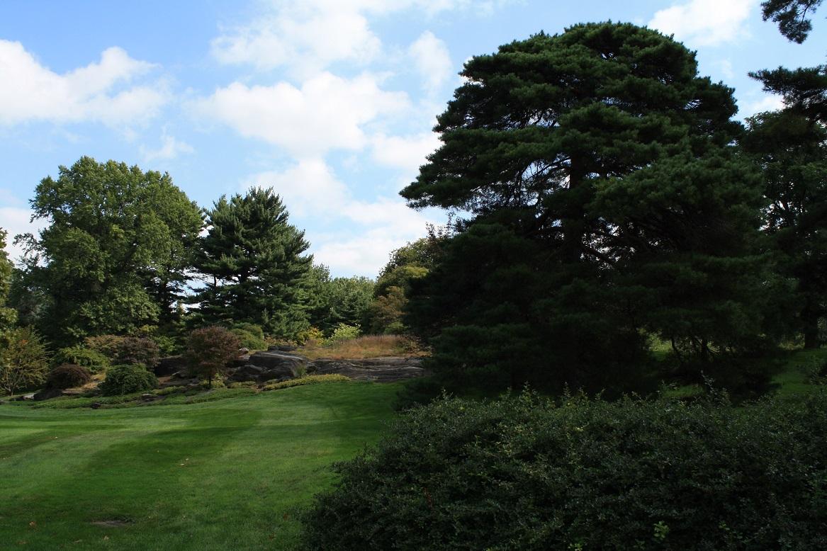 NYBG Bäume