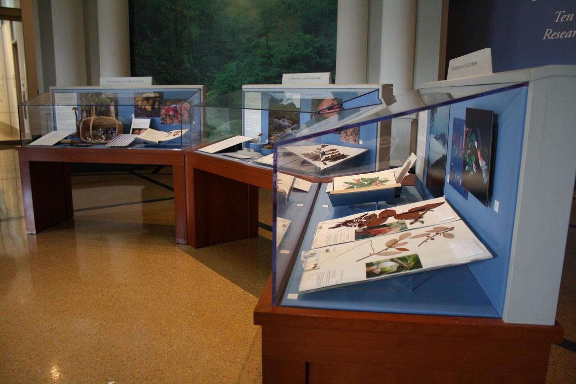 NYBG Herbarium