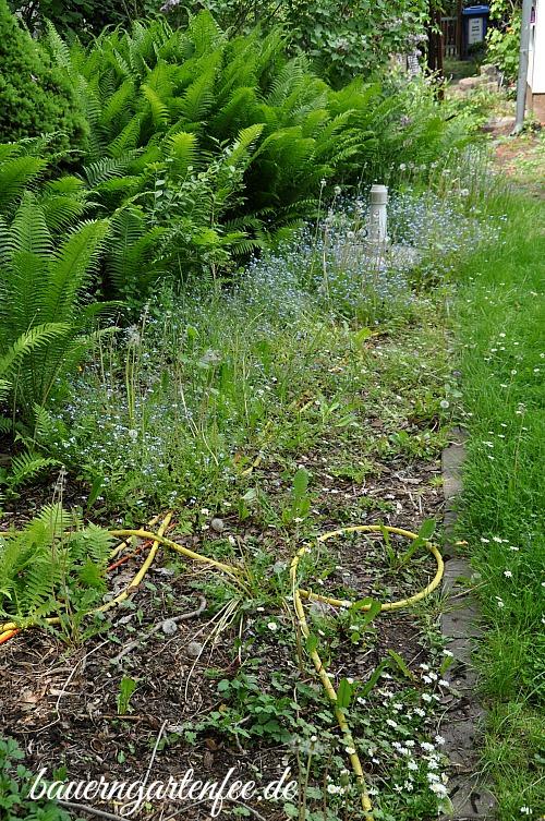 Garten mit Pusteblumen und Vergissmeinnicht