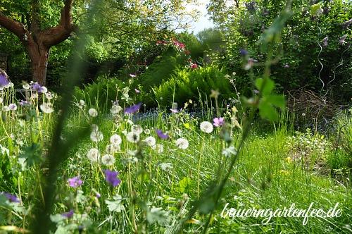 Verwunschener Garten mit Pusteblumen und Vergissmeinnicht. Foto: Petra A. Bauer 2015