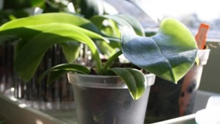 Lieblings Warum blüht meine Orchidee schon so lange nicht mehr?! 6 mögliche #MX_85