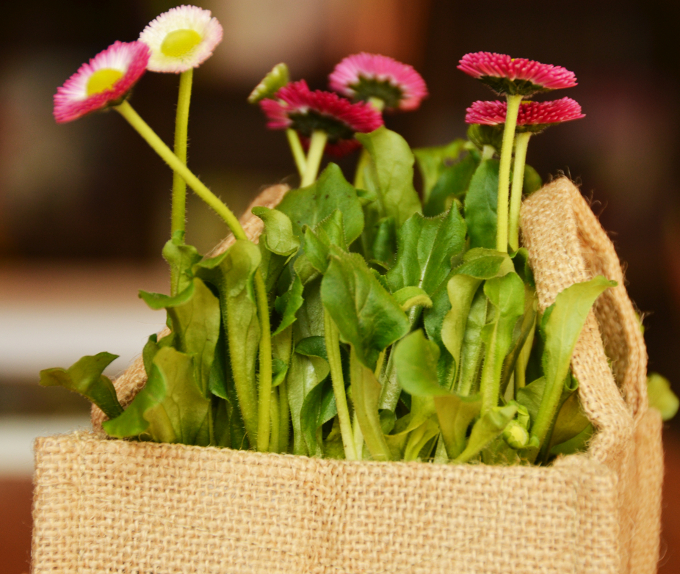 Tasche bepflanzen