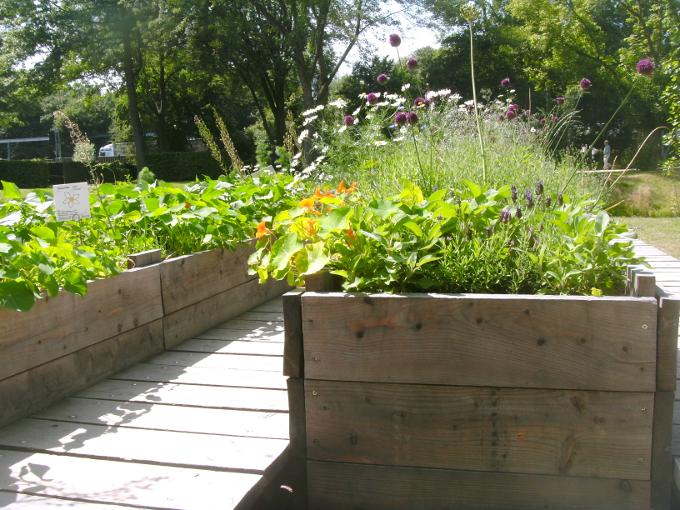 Hochbeete, Urban Gardening, Stadtgärtnern,