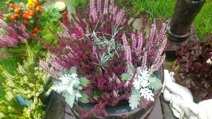 Herbstbepflanzung, die Pflanzen vertragen auch Frost