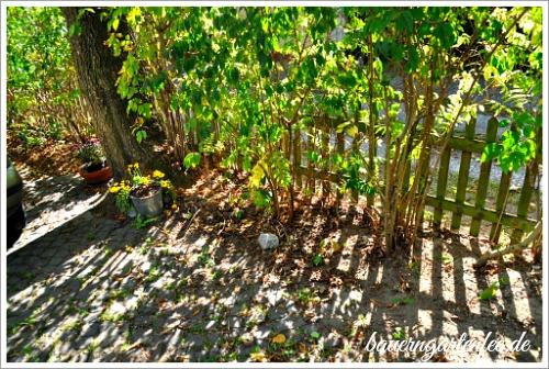 Bei mir sehen Gartenecken in der Regel eher so aus ...