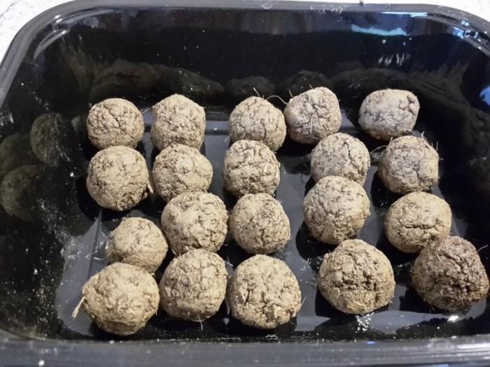 DIY Samenkugeln am besten auf einem Kuchengitter trocknen