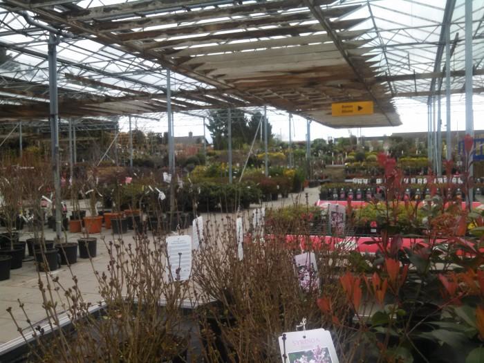 Alles was man für den Garten braucht: Von einfachen Obstgehölzen über Rosen und mediterrane Pflanzen bietet Jacobs einfach alles.