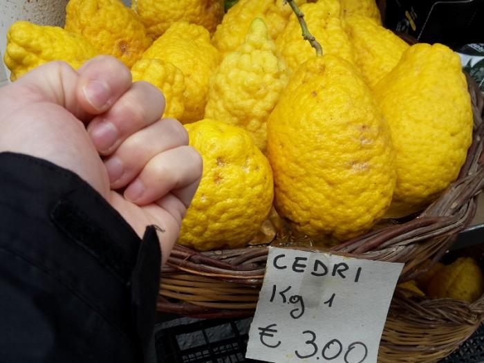 Zitronat-Zitronen, Cedri, Citron, Cedrat (Citrus medica)