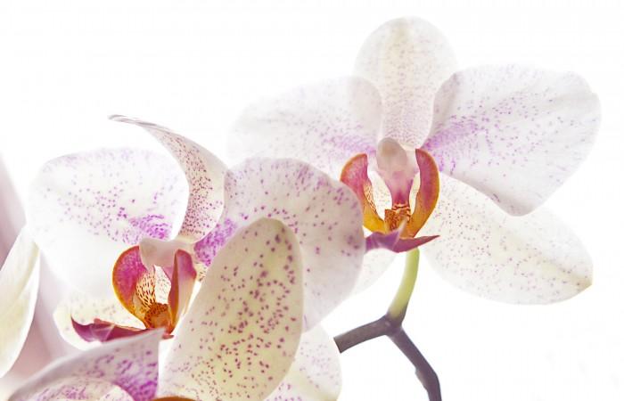 5 anzeichen bei denen man von einer orchidee besser die finger l sst diese rombergs. Black Bedroom Furniture Sets. Home Design Ideas