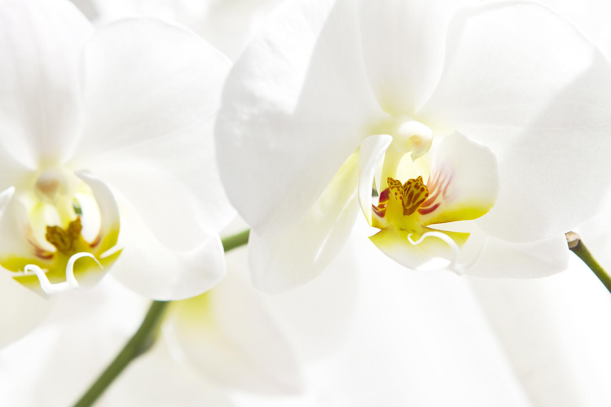 5 anzeichen bei denen man von einer orchidee besser die. Black Bedroom Furniture Sets. Home Design Ideas