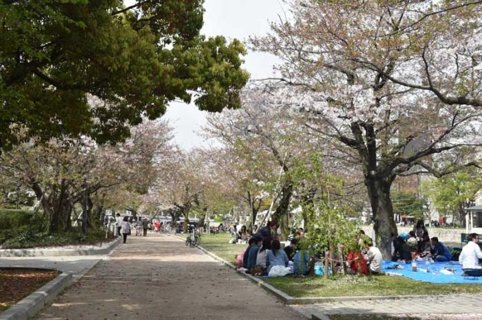 Kirschblütenfest in Hiroshima