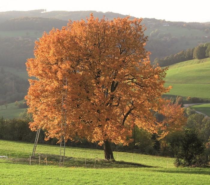 Elsbeee im Herbst