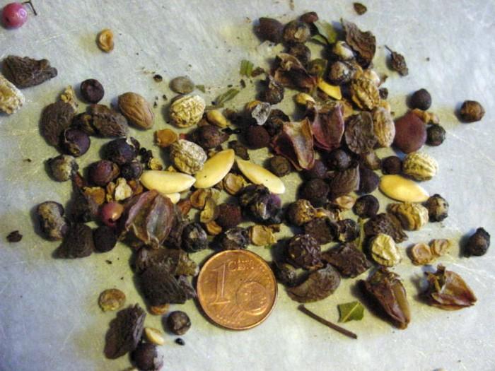 Ach so groß sind die Samen, gut zu wissen!