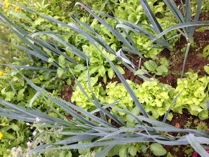 Lauch und Salat