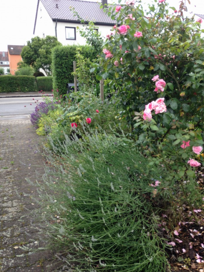 Lavendel und Rose