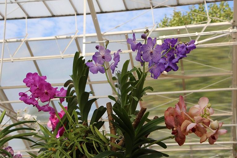 Wenn du nicht gerade eine Vanda Orchidee hast, die wurzelnackt, also gänzlich ohne Substrat und Topf kultiviert wird, ist ein passender Übertopf eine tolle Sache.