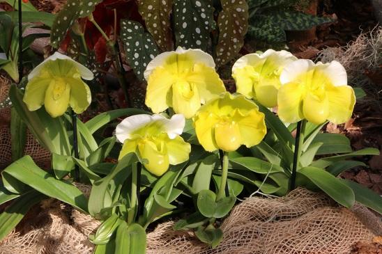 Um die Sonnenenergie optimal auszunutzen benötigt deine Orchidee jetzt ausreichend Wasser und Nährstoffe. Foto: J. Klepgen