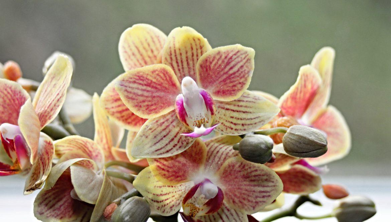 Warum Blüht Meine Orchidee Schon So Lange Nicht Mehr?! 6