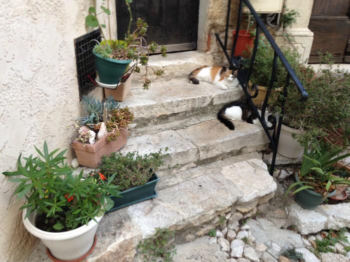 treppe-mit-katzen