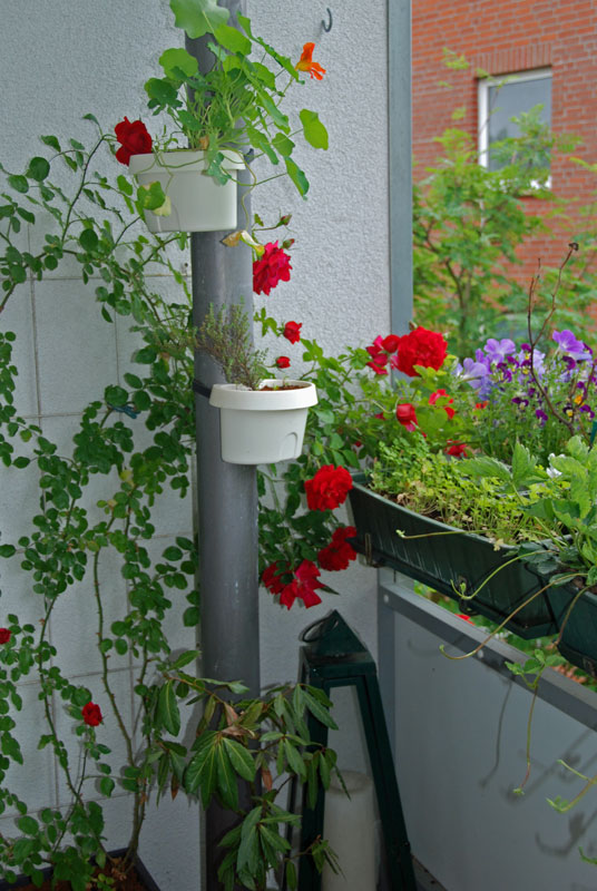 Auf meinem Balkon im Frühling
