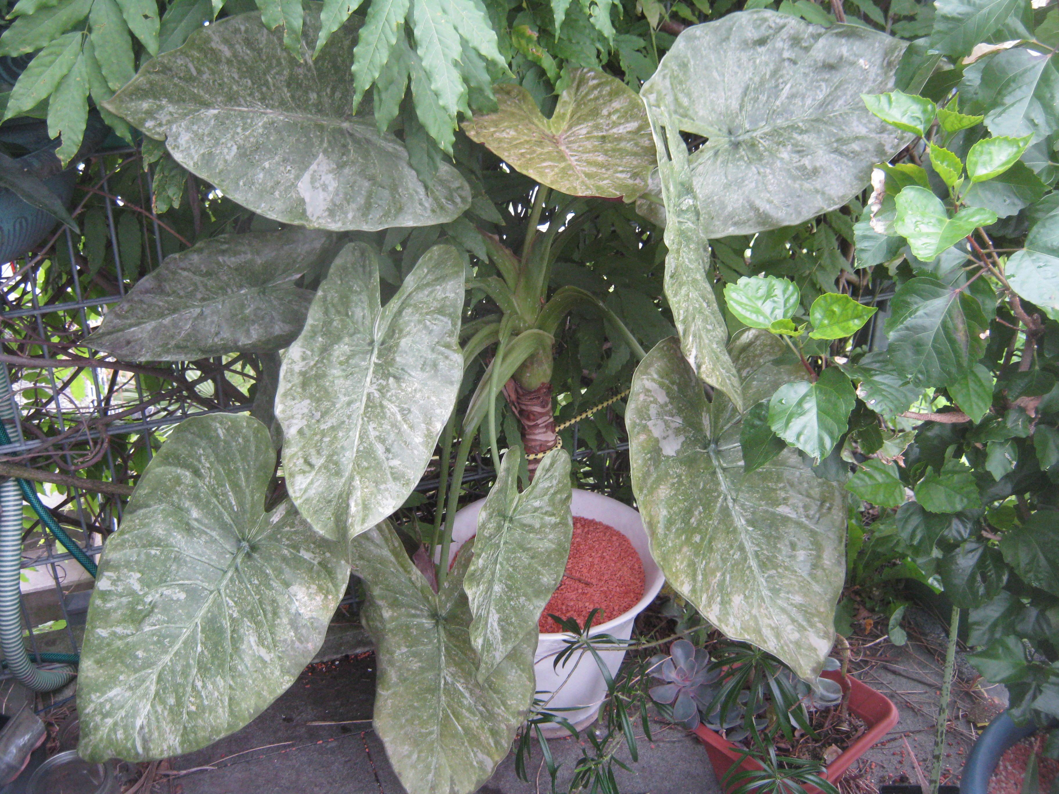 F r jeden gibt es die richtige pflanze - Schattenpflanzen zimmer ...