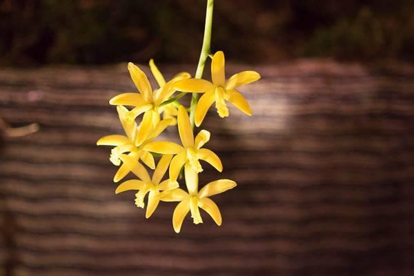 Viele Orchideen haben im Herbst und Winter ihre Hauptblütezeit. Das bedeutet viele tolle Orchideenveranstaltungen. Foto: Jessica Klepgen