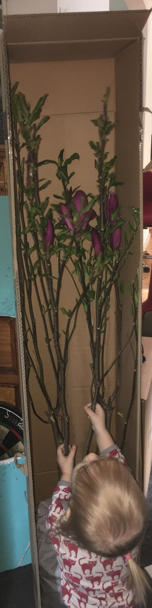 magnolie-karton