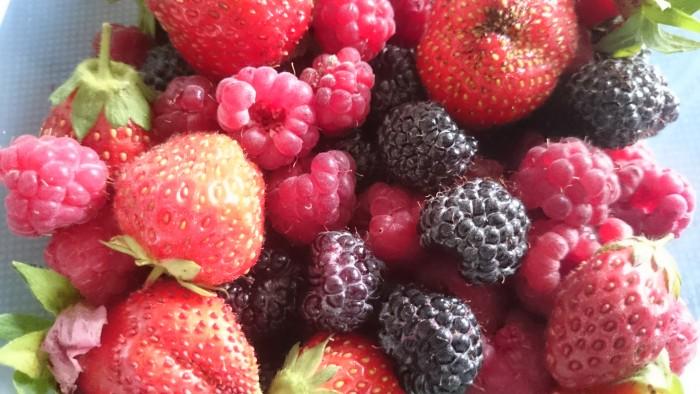 Erdbeeren, rote und schwarze Himbeeren eingelegt in Rum. Superlecker