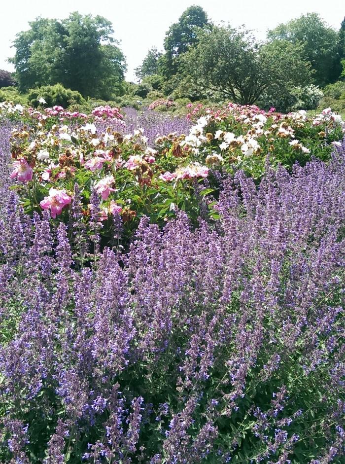 Volle Blüten- und Bienenpracht. (c) Foto: Fenja Schlegel