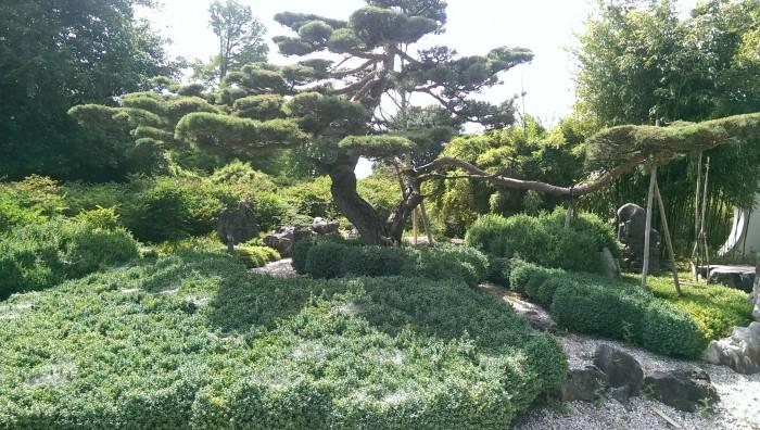 Beeindruckende Formen - da wird man echt traurig, dass man nur einen kleinen Reihenhaus-Garten hat! (c) Foto: Fenja Schlegel