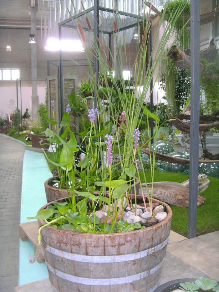 Miniteich, Wasserpflanzen