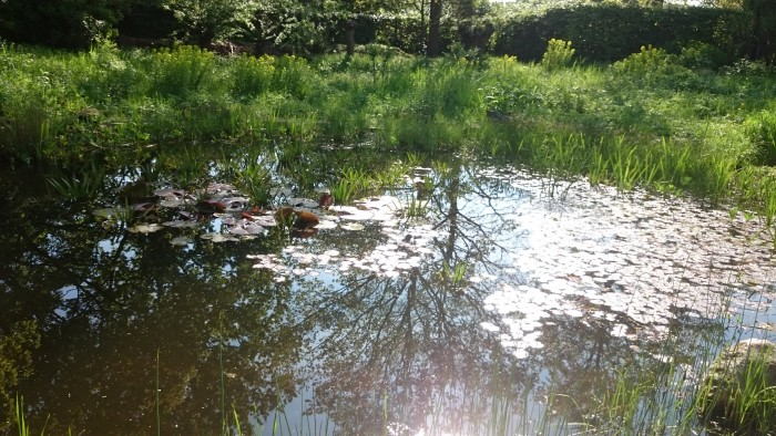 So groß wie der Bioteich im BIO-GArten Düsseldorf muss der Teich im Garten gar nicht sein. Übrigens: Der wird nur durch Pflanzen gereinigt und benötigt keine Pumpe