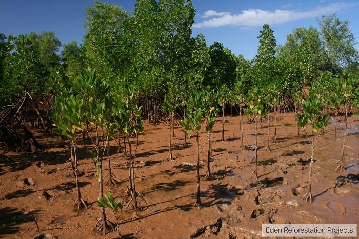 Ecosia, Madagaskar, Internetsuche, Aufforstung