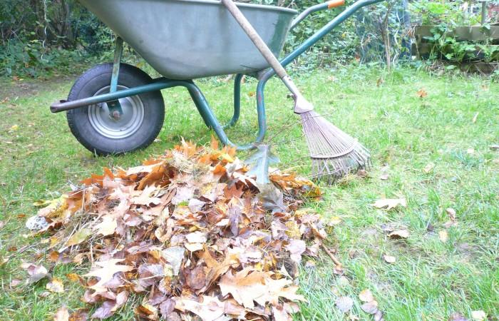 Im Oktober fällt viel Laub herunter. Auf dem Rasen sollte man es wegharken. Foto: Rieke Leemhuis